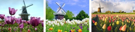 1-2 Windmills and tulips