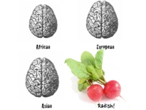 1-7 Radish on the brain v2